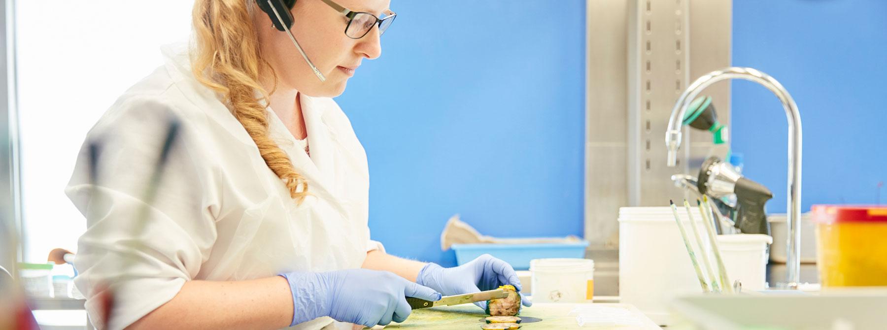 Vorbereitung Präparat, Pathologie, Sabine Nann