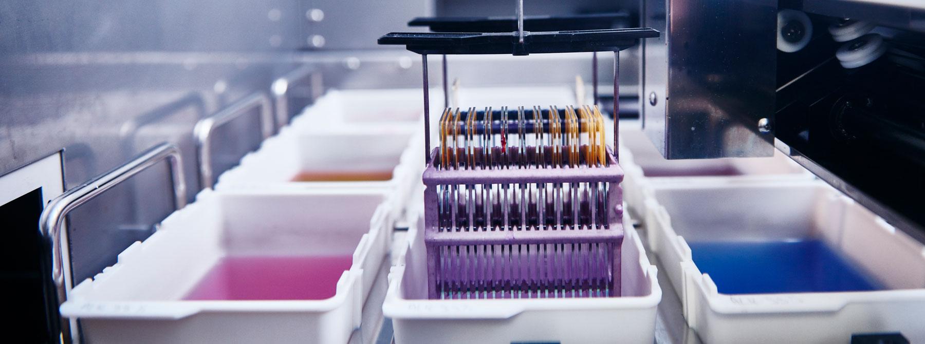 Objektträger werden in einem Färbeautomat in die Farblösung getaucht